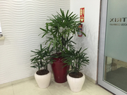 Indoor And Outdoor Plants On Rent In Gurgaon