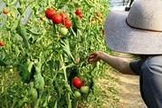 Farming Business Opportunities